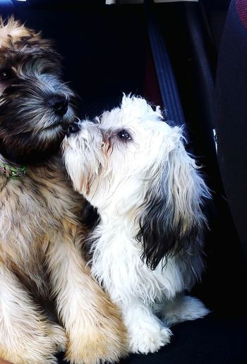 Gimmie a kiss!! Puppies Kisses Cute Dogs I Love My Dogs