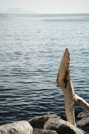Napoli Travel Travel Photography Beauty In Nature Blue Blue Sky Bluesky Day Dead Tree Horizon Over Water Napoliphotoproject Nature No People Outdoors Photo Scenics Sea Sea And Sky Sky Tranquil Scene Tranquility Travel Destinations Travelphotography Tree Water EyeEmNewHere