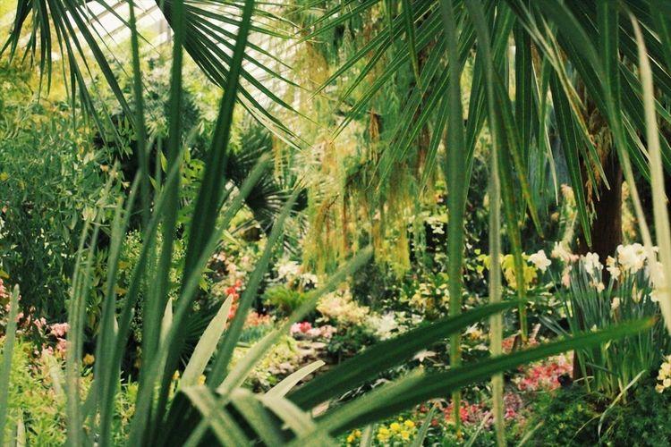Plant Growth