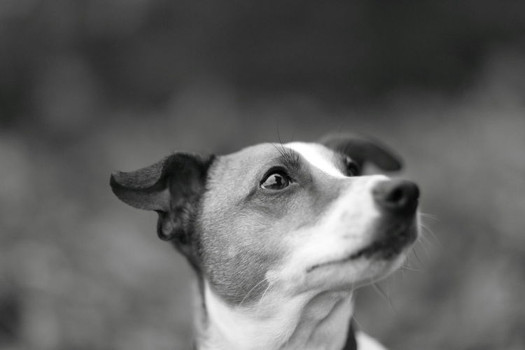 Portrait of a dog looking attentive