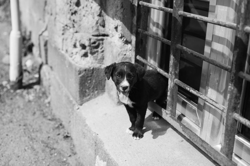 Animal Animal Themes Black And White Friday Dog Outdoors Pet Pets Puppy Street Streetphotography