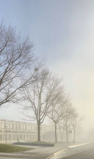 Bare trees on field by buildings against sky