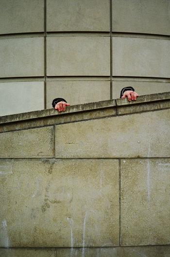 Bird perching on wall