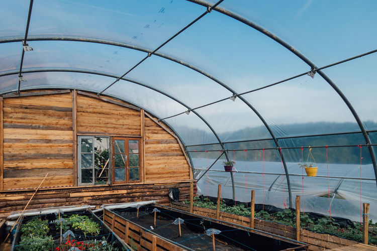 View of plants in greenhouse