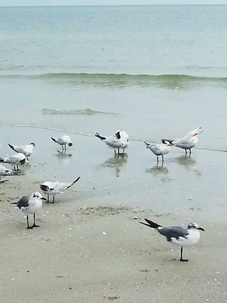 Bird Animals In The Wild Animal Wildlife Sea Flying Water Animal Themes Large Group Of Animals Outdoors Beach No People Nature Day