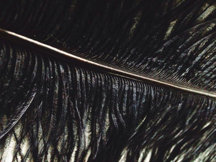 Feathers Black Allinblack