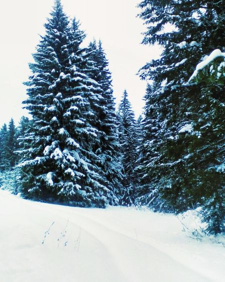 Winter Snow Tree Cold Temperature Nature Christmas Christmas Tree Beauty In Nature No People Scenics Landscape Tranquil Scene Outdoors Day Branch Coniferous Tree
