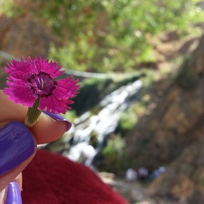 Waterfall çiçek Flower Purple mor nailpoint red doğa green yeşil natural