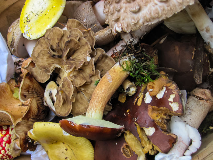 Food And Drink Food Freshness Still Life No People Wellbeing Healthy Eating Mushroom Close-up High Angle View Edible Mushroom Vegetable Fungus Indoors  Day Table Plate Ready-to-eat Bread Indulgence Snack Foraging Wild Food Wild Mushrooms