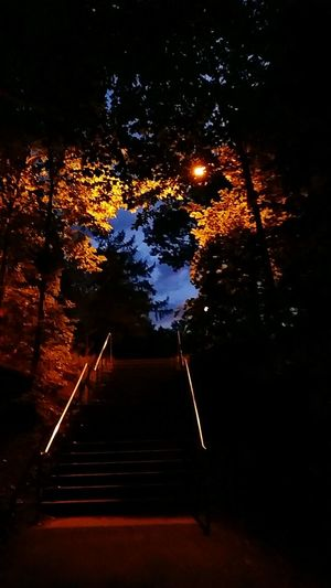 Path Awaytogo Treesight Beautiful Lightindarkness Sunfall Shadow