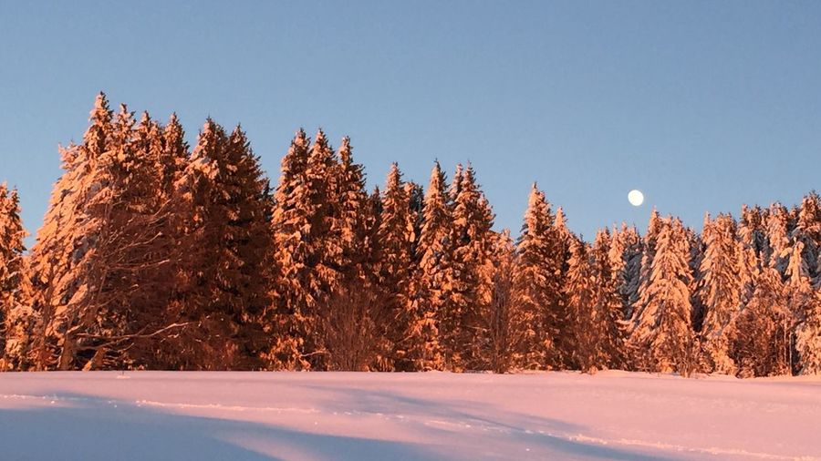 Winter Evening Blackforest Moon It's Cold Outside Showcase: January Colors Of Nature Pastel Power The Great Outdoors With Adobe The Great Outdoors - 2016 EyeEm Awards