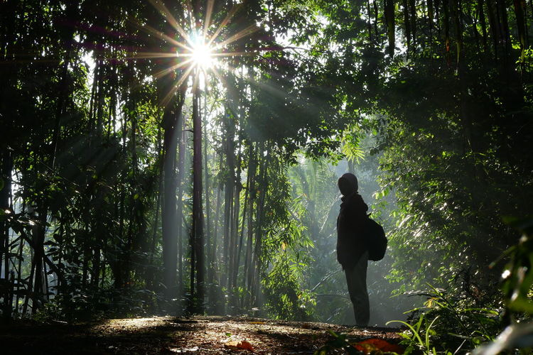 Sunlight streaming through man in forest