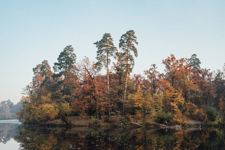 Trees by lake against clear sky during autumn