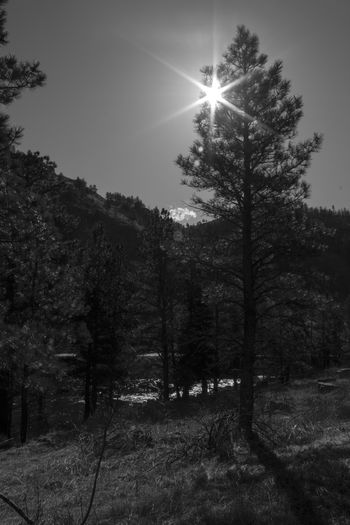 Black And White Black And White Photography Colorado Ribo Sun Star Perspectives On Nature Postcode Postcards