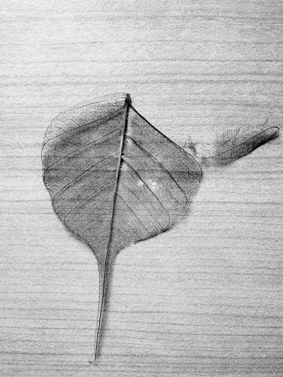 Leaf Plant Black And White Photography Nature Photography Nature_collection Deforestation Deforestation Effect Live For The Story Global Warming Climate Change