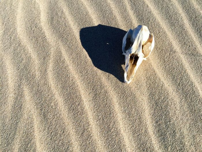 Close-up of animal skull on sand