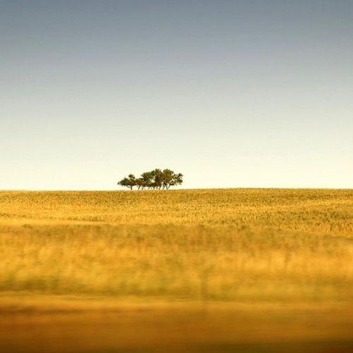 Only the bravest can choose to remain lonely. Travel Nature Sky Beautiful tree skylovers skypainters mothernature ladd00 scenery landscape canada explorecanada travelcanada prairielife prairies prairieskies landoflivingskies Saskatchewan sask exploresask