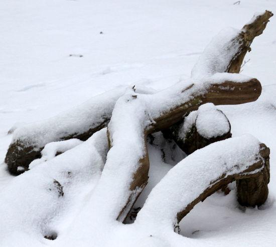 Winbruch Im Schnee Close-up Cold Temperature Frozen Nature Outdoors Snow Winter