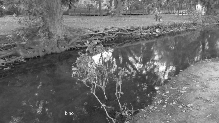 Evening Walk Around My Neighborhood Reflection Tree Root Collection Black And White Photography Clam River Walkway Cadillac Michigan