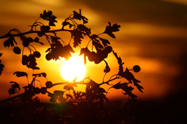 AndIloveyouforever Missingyou Tree Sunset Plant Part Sunlight Silhouette Leaf Sun Branch Romantic Sky