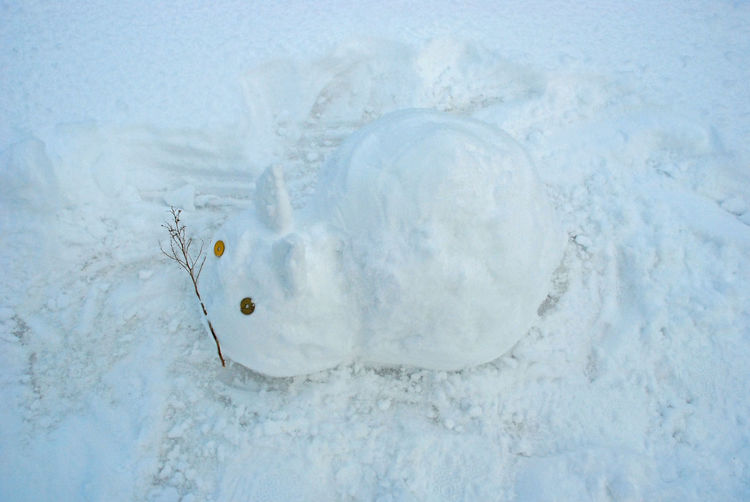 Close-up Cold Days Cold Temperature Cute Day Nature No People Outdoors Snow Snow Rabbit Snow ❄ Water White Color Winter