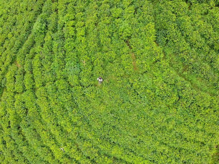 Drone view of farmer standing on field