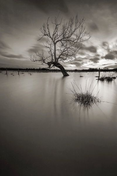 Stranded Bw_collection Monochrome Tree_collection  TreePorn Tree Flood Winter Trees Lone Tree Tranquility Tranquil Scene Beauty In Nature Nature Scenics Sky Bare Tree Reflection Cold Temperature Winter Tree Solitude Remote Landscape No People Water Lone