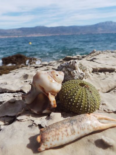 Scenic view of shells on shore