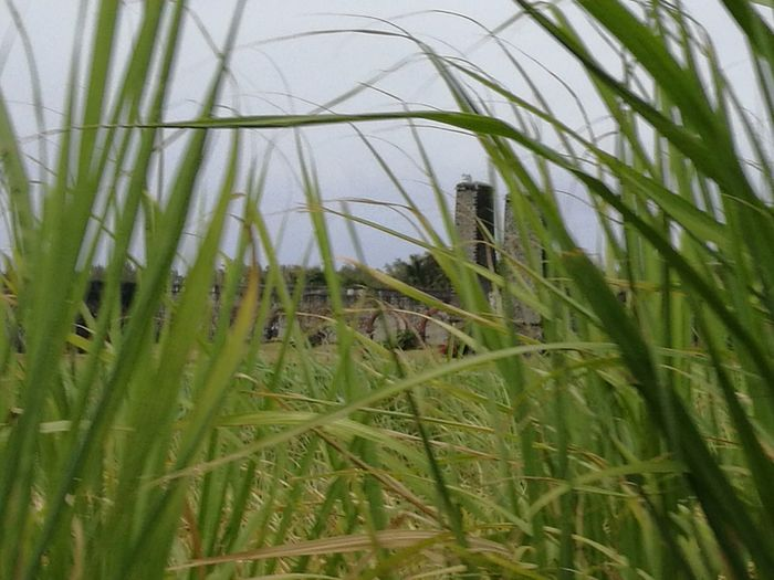 Sugar Cane Fields Green Leaves Old Mill Site Stone Built Rural Scene Agriculture