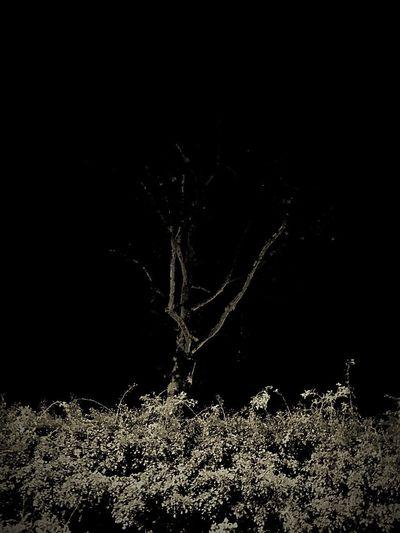 Tree Black And White Autumn Tree Autumn Trees EyeEmNewHere EyeEm Nature Lover Tree Silhouettes Tree Silhouette Trees Tree Black & White Black And White Blackandwhite Nature No People Night Beauty In Nature EyeEmNewHere
