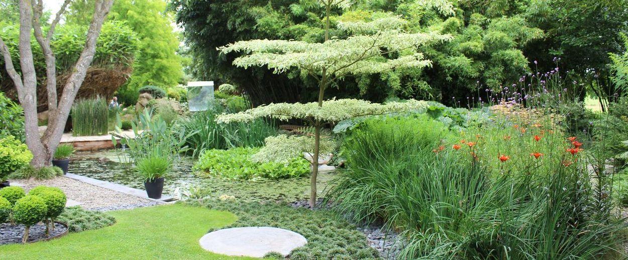 Plant Tree
