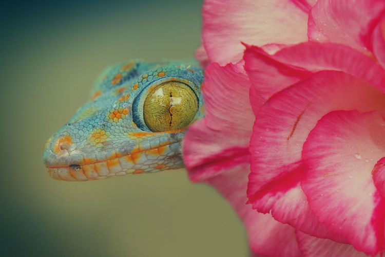 Close-up Flower Macro No People One Animal Reptile