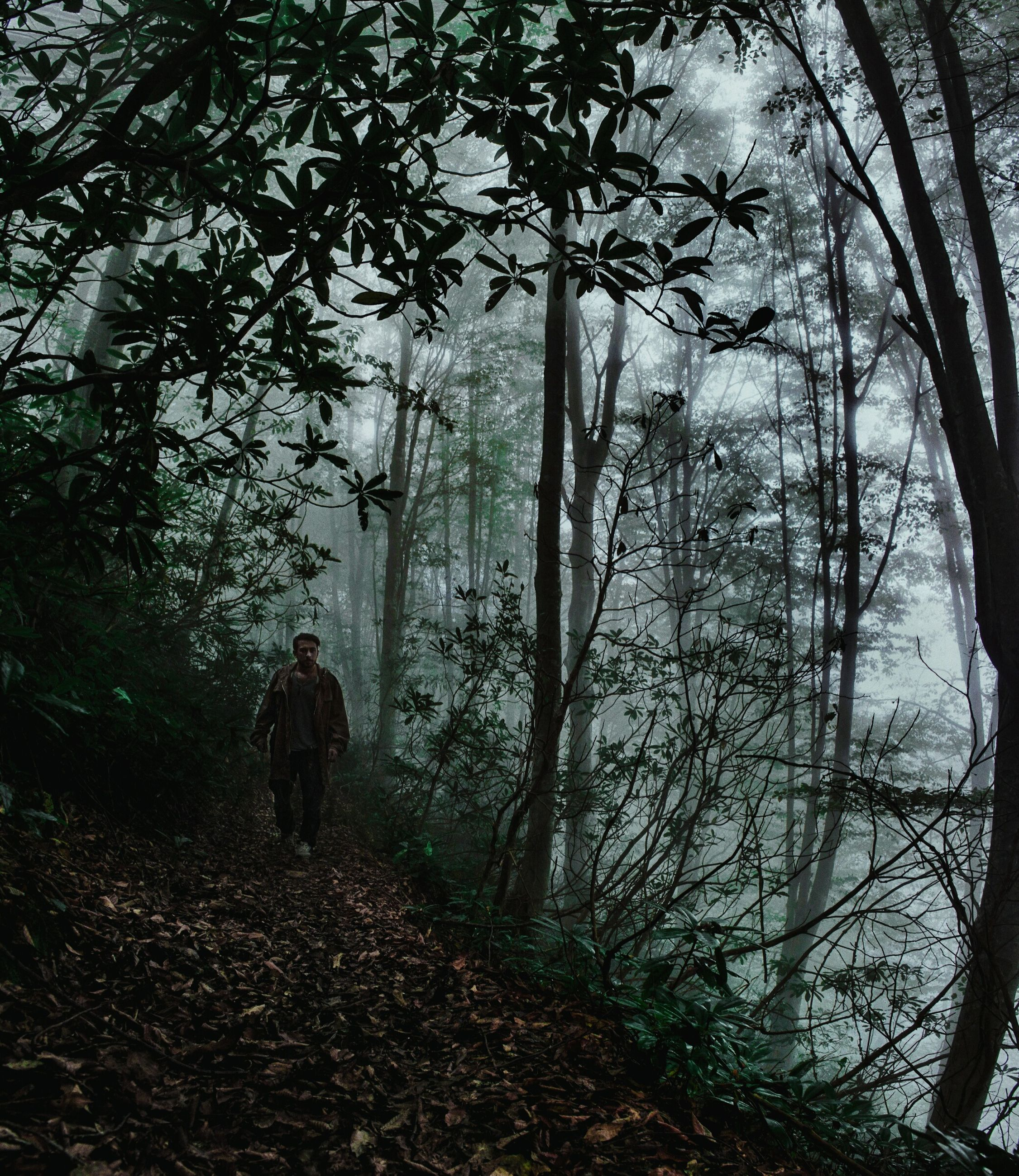 tree, full length, walking, nature, one person, silhouette, outdoors, forest, real people, fog, people, men, beauty in nature, adults only, day, landscape, one man only, only men, adult