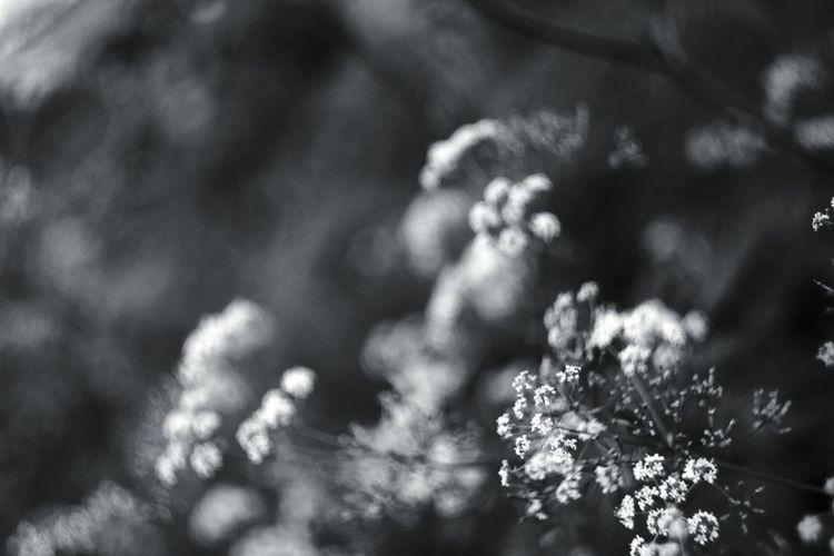 Monochrome Black And White Nature Helios 44-2 Helios 44-2 58mm F2 Vintage Lenses EyeEm Nature Lover Flower