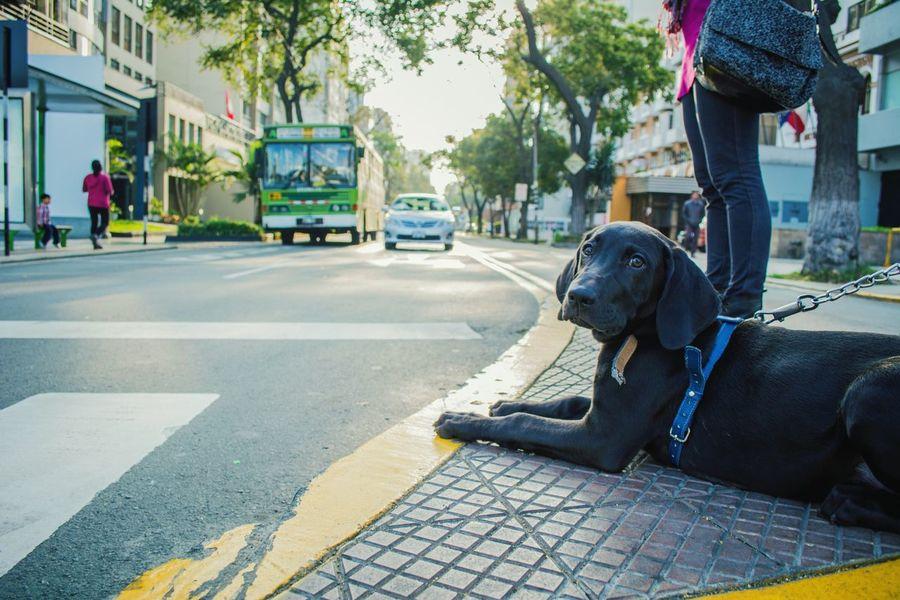 """Betún"" the dog. Lima-Perú Dog Love Pet Photography  TheWeekOnEyeEM Streetphotography"