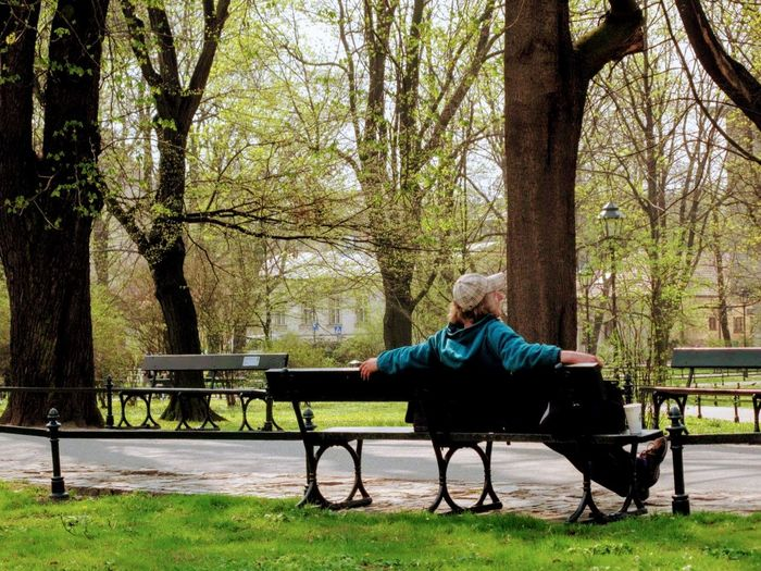 Adult Animal Themes Bench Day Grass Nature One Man Only One Person One Senior Man Only Only Men Outdoors Park - Man Made Space People Senior Adult Sitting Tree
