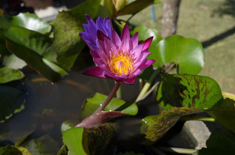 Green Growth Life Lotus Flower Nature Pink Plant Sunny Bloom Flora Flower Garden Insect Lake Leaf Lotus Lotus Water Lily Macro Water