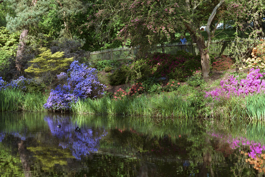 Blue Ceanothus Grass Green Impressionist In Lake Landscape Looking At Camera Man Natural Nature Outdoors Photography Pink Plants Pond Reeds Reflection Scene Shadowy Shady Trees Water Yellow