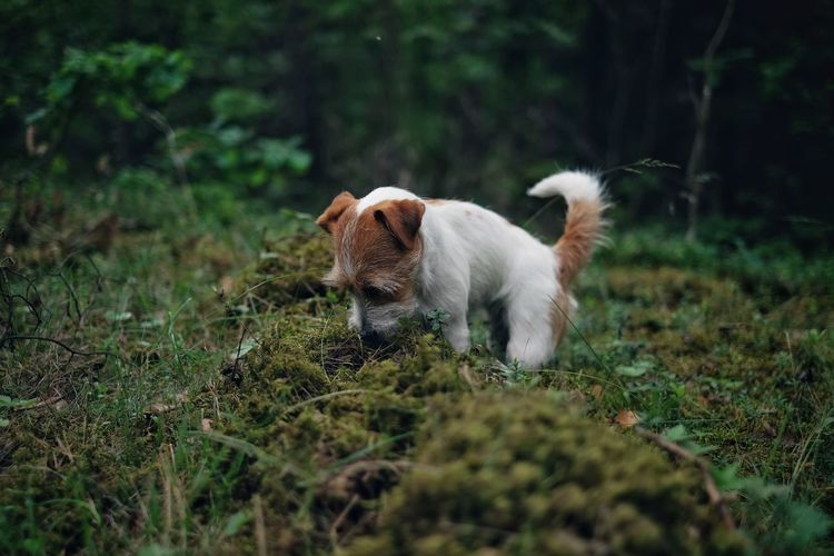 Close-Up Of Dog In The Forest