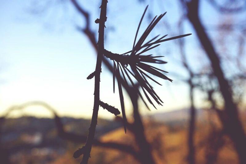 Infocus Pixxzo SonyAlpha6000 Taking Photos Enjoying Life Hikingadventures Hikeporn