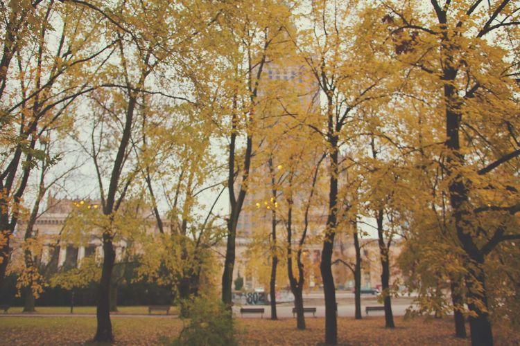 Trees in autumn