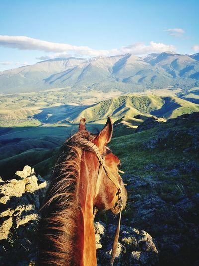 Южный Алтай Horse Kazakhstan Beauty In Nature Nature Mountains And Sky Weekend Activities East Kazakhstan Katonkaragay Altai Mountains Altai EyeEm Selects Mountain Sky Landscape