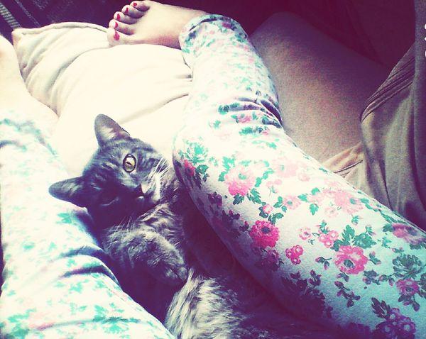 Catsofinstagram Lovelovelove Pretty♡ Wats Up honeeyyy <3 , mi compañia cuando no esta mi amoreeee.INFINITE LOVELOVELOVE <33
