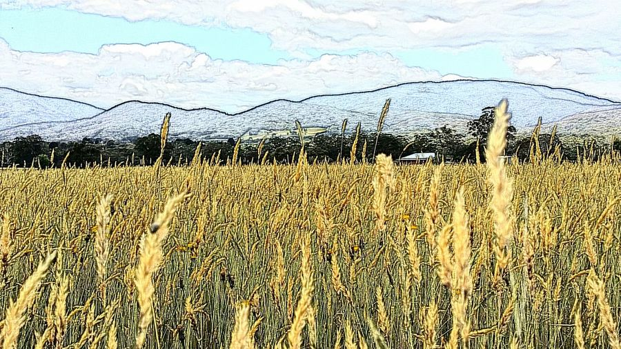 Rustic Melbourne Rocks Photography Mountains Yarra Valley Grass The Wild Is Calling Upper Yarra Valley