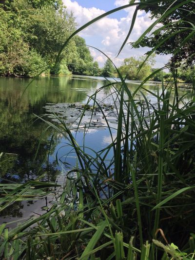 Twyford Fishing Lake Green Nature Day Tree Outdoors Nature No People The Way Forward Sky Tranquility Beauty In Nature Water Clear Sky Reflections Life Changed Forever My Year My View Next Chapter