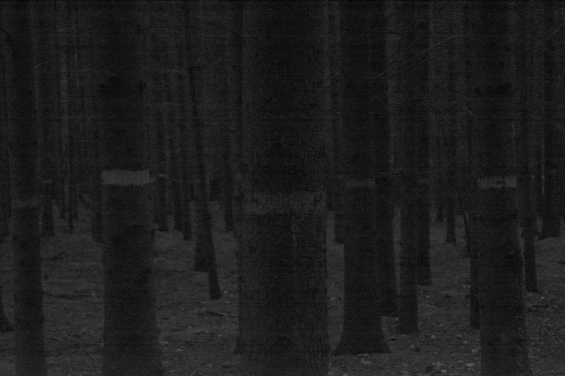 Night Forest Trees Magic Of Nature Beauty In Nature Belarus Nature From My Point Of View By Ivan Maximov Scenics Great Outdoors Eyeem Photo Exceptional Photographs Nature Forest Monochrome Nature Trunks Night Vision Darkness Coniferous Forest Nature Lover Black And White Composition Tranquil Scene Tranquility Landscape Noise
