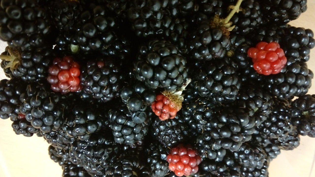 fruit, berry fruit, blueberry, freshness, food and drink, blackberry, blackberry - fruit, close-up, raspberry, food, sweet food, healthy eating, no people, red, nature, indoors, day, water, ready-to-eat
