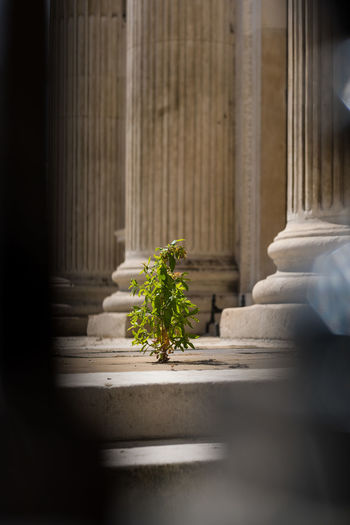 Close-up of potted plant outside building