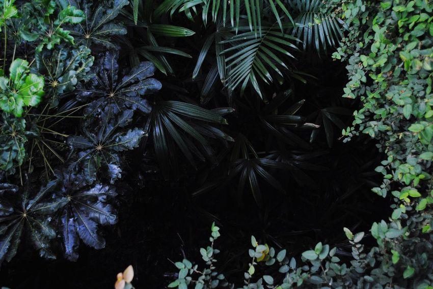 Plant Botanical Gardens Growth Freshness Green Color Leaf