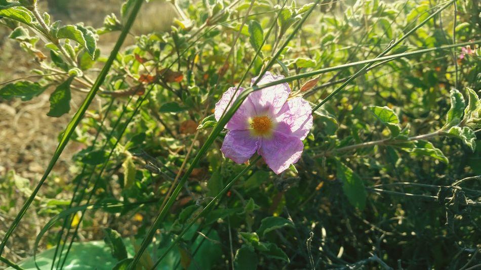 Flower Small Flower Purple Flower 🌸 Good 🌹🌹🌹🌹🌹(^_-) ⚘🌼🌷🍀🌿🌹💐🌸 🌹 🌹🌷 🌷 💐 💐 🌸Nature🌸 🌸~ Beautiful Flowers 🌸 🌷 Flowers 🌹 🌸 Nature 🌸flower🌸 Nature Photography Nature Collection ❤❤ Nature Beautiful Nature Beautiful 🌸🌸🌷 ❤️❤️😍😍